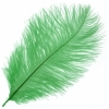 "Ostrich Drab Feathers 6-8"" Premium Quality Emerald"
